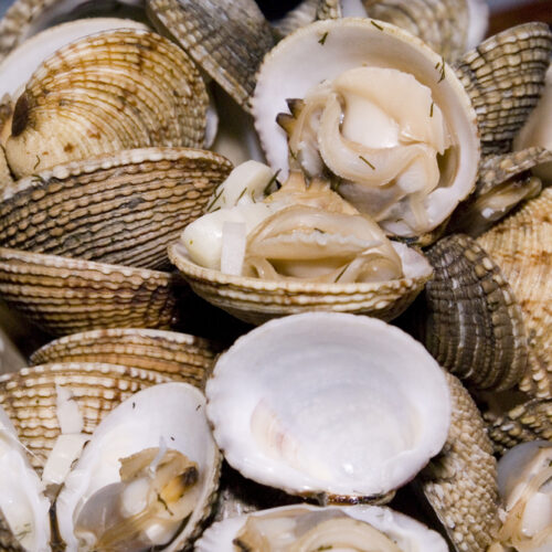 Cockles,(cerastoderma,Edule),Dish,With,Dill